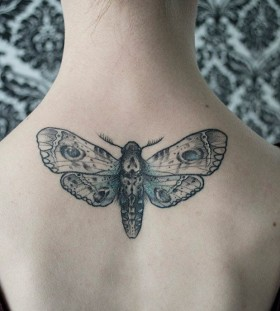 Sweet moth back tattoo