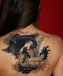 Whit and black swan tattoo