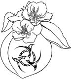 Peach Blossoms Prunus Persica Tattoo By Adrick Rusiecki