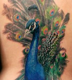 Beautiful Peacock Bird Tattoos Design Ideas