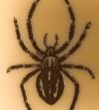 Cobweb Spiders Black Widow Tattoo Design