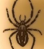 Cobweb Spiders Black Widow Tattoo Design