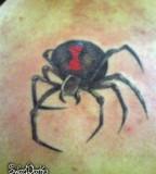 Black Widow Spider Tattoos and Art Tattoos Design