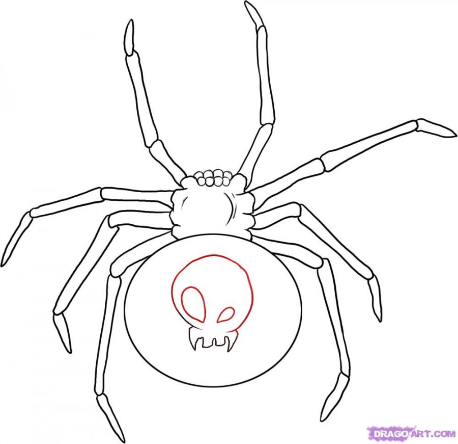 Drawing Black Widow Spider Tattoos Design Images