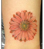 Awesome Design of Daisy Flower Tattoo for Women - Flower Tattoos