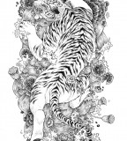 White Tiger Tattoo Sketch