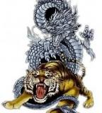 Martial Art  White Tiger Dragon Tatoo
