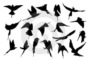 Flying Bird Silhouette Tattoo With Glamorous Design