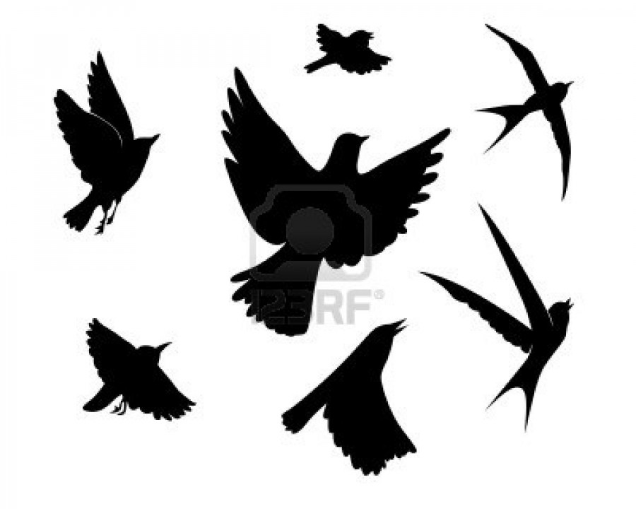 Flying Birds Silhouette On White Background Vector Illustration