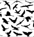 Image Of Black Flying Bird Silhouette Tattoo Clipart