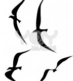 Splendid Flying Birds Silhouette Tattoo Vector Illustration