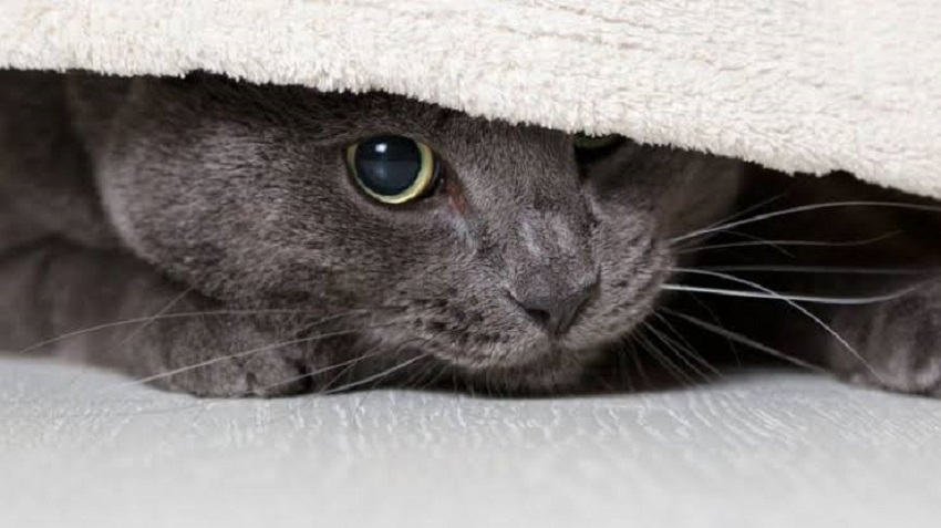 hiding behaviour in cats