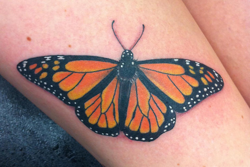 Monarch Butterfly Done at Horns and Halos Tattoo Design