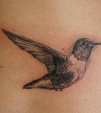 Minimalist Hummingbird Tattoo detailed