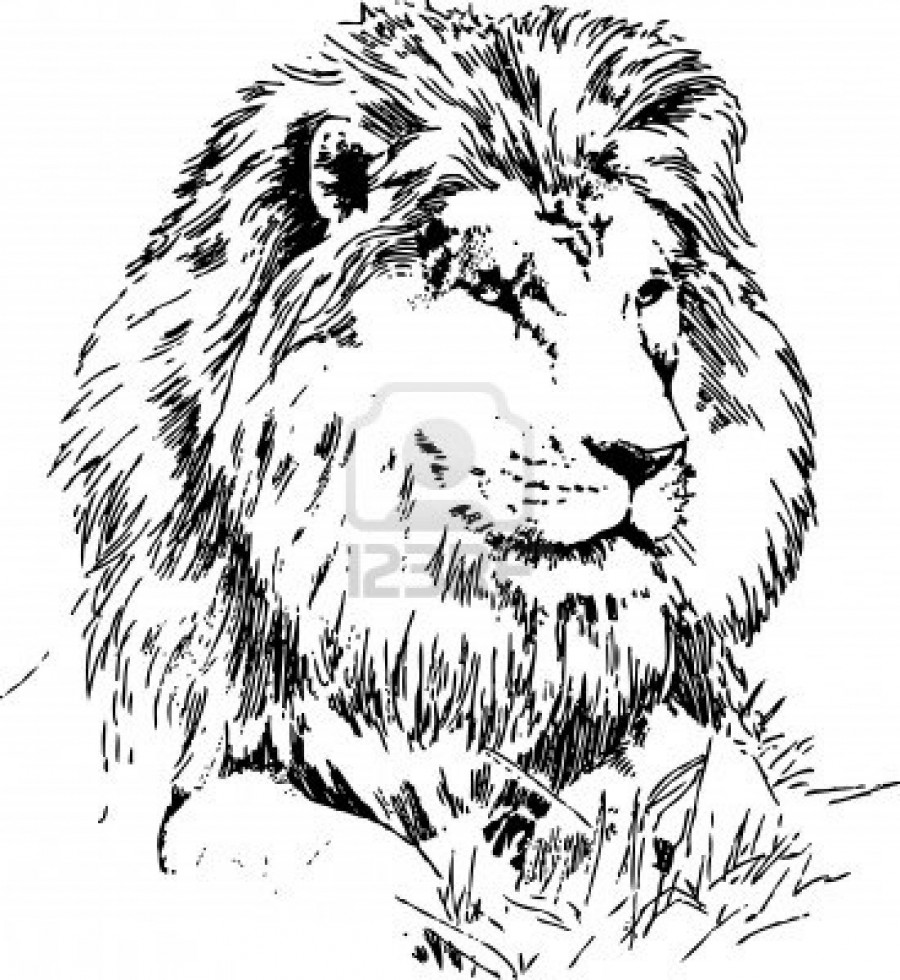 Lion Lying On Grass Hand Drawing Black On White Tattoomagz