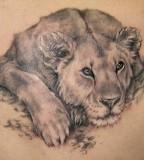 Resting Lion Tattoo Designs - Animal Tattoos