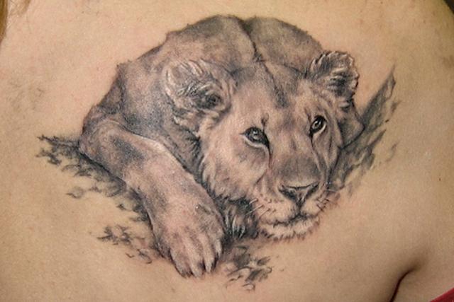 Resting Lion Tattoo Designs Animal Tattoos Tattoomagz Tattoo