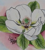 Magnolia Drawing By Cheryl Shibley Magnolia Fine Art Prints And