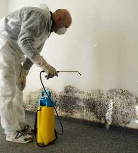 mold inspection and testing