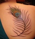 Attractive Shoulder Feather Tattoo Designs - Attractive Shoulder Tattoos for Women