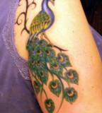 Peacock Tattoo Design on Arm for Women