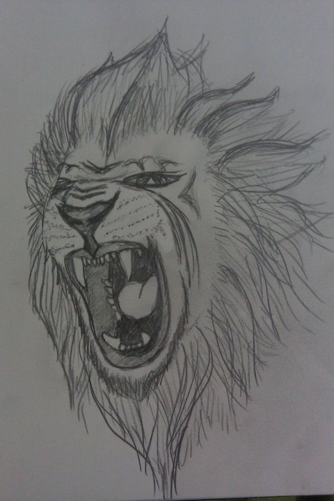 Roaring Sketch Tattoo Lion Tattoo