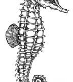 Seahorse Skeleton Tattoo Design