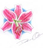 Tattoo Stargazer Lily Example By Circathomas