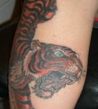 Amazing Tiger Tattoo Designs for Women