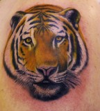 Tiger Tattoos Designs Ideas Men Arms