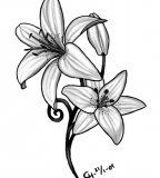 Lily Tattoo Meaning Ideas Image