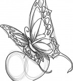 Tribal Butterfly Tattoo Drawing Sample