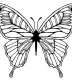 Butterfly 	Sketch Tattoo Design