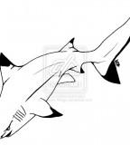 Tattoo Shark By Valkyriewings On Deviantart