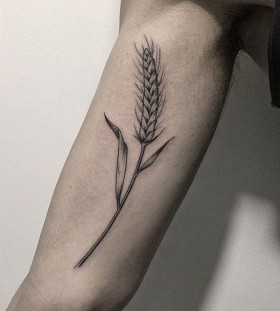 wheat tattoos for men